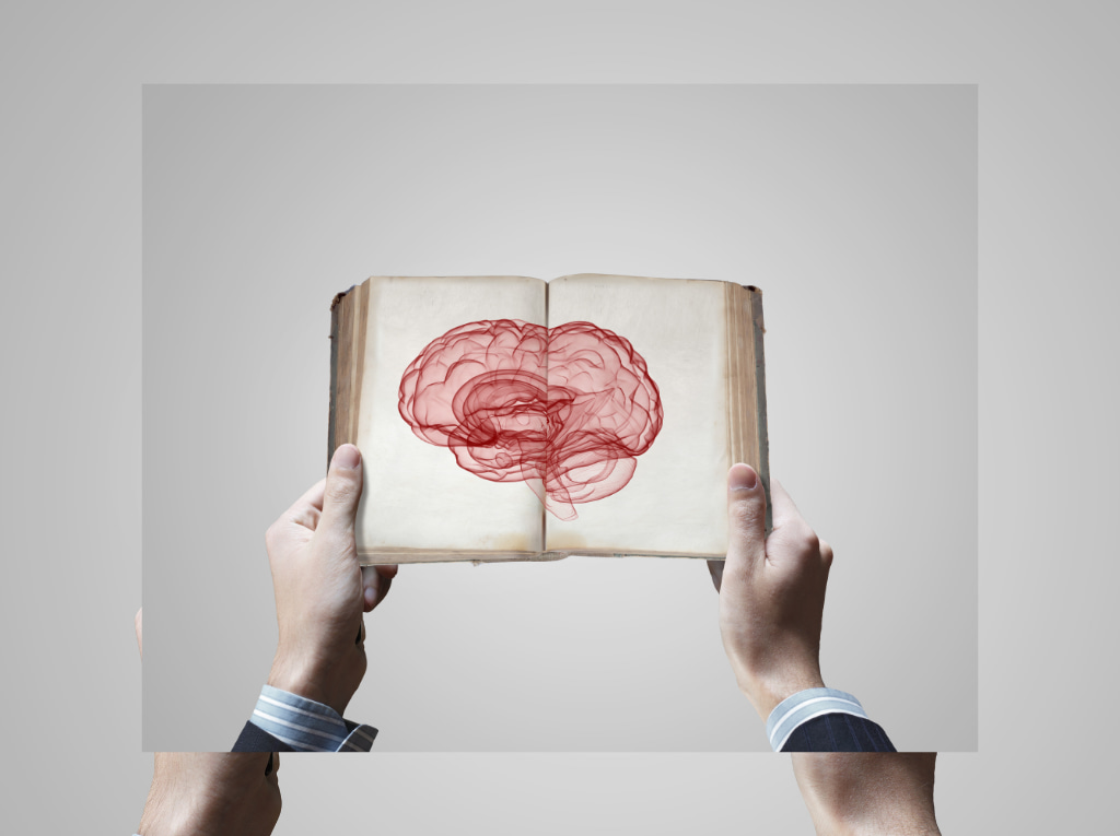 Cuál es la función del cerebro